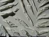 15_Lisa-Enderli__Papercuts_2008-30x30cm_Detail_DSC03031_1